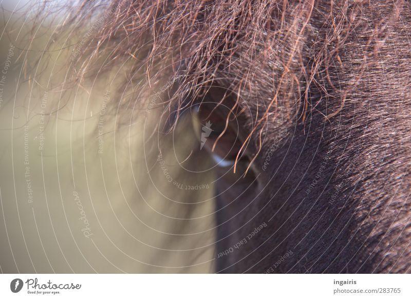 Im Moment des Augenblicks Natur grün Tier braun Zufriedenheit beobachten Pferd Neugier Freundlichkeit Momentaufnahme Nutztier Tierliebe Reiten Mähne Körperteile