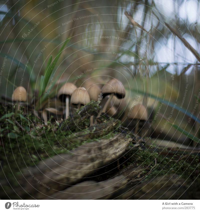 Jemand noch ein Pilz? Natur Wald Umwelt Herbst Moos Versammlung loyal Einigkeit
