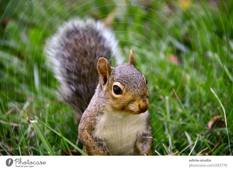 Guten Morgen Herr Eichhörnchen Ein Lizenzfreies Stock Foto