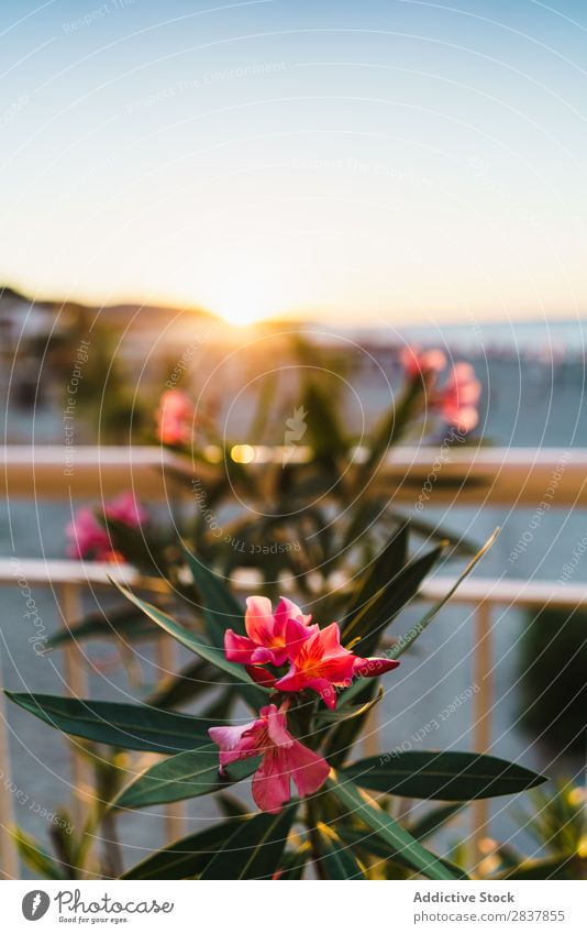 Blühende Blumen im Sonnenlicht tropisch Überstrahlung Sträucher frisch Sommer Natur schön Garten Beautyfotografie Pflanze hell exotisch Menschenleer Blatt