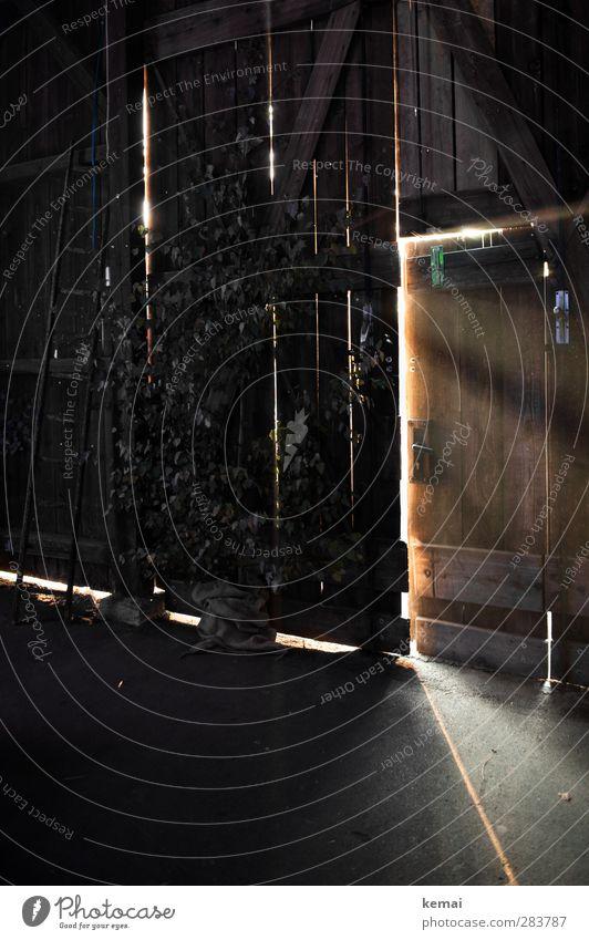 Eindringlich Hütte Gebäude Scheune Scheunentor Tür Leiter Holzleiter leuchten dunkel Lichtstrahl offen einfallend Farbfoto Gedeckte Farben Innenaufnahme