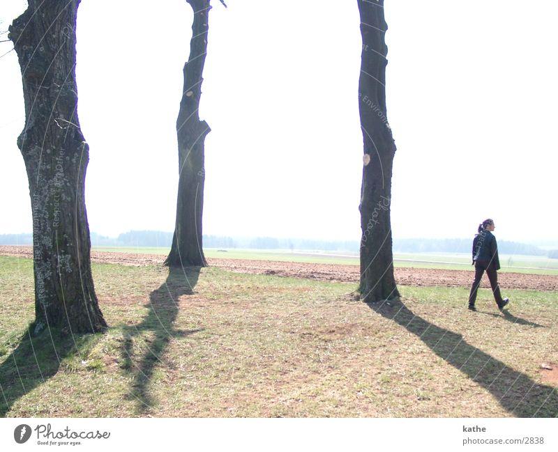 trilogie Mensch Baum Spaziergang gehen