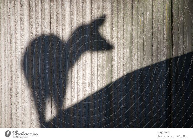 Schattenreh Zoo Wildtier Reh 1 Tier Beton Blick stehen grau schwarz Farbfoto Gedeckte Farben Außenaufnahme Menschenleer Textfreiraum rechts Tag Silhouette