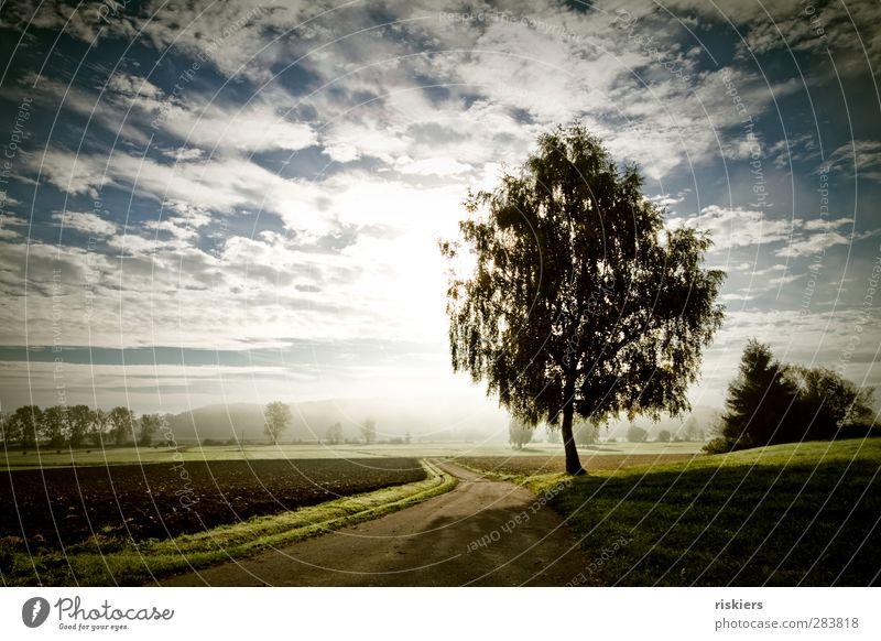 fall morning Umwelt Natur Landschaft Pflanze Tier Himmel Wolken Sonne Sonnenaufgang Sonnenuntergang Sonnenlicht Herbst Nebel Baum Wiese Feld Wald Lebensfreude