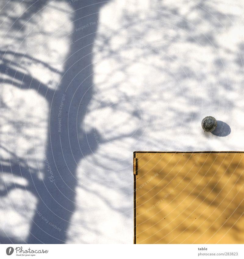 Schatten seiner selbst . . . Natur alt Stadt weiß Pflanze Baum Einsamkeit Winter Haus gelb Umwelt Wand Herbst grau Mauer Gebäude