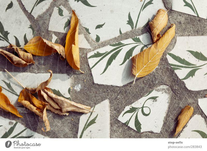 Interaktion Natur Pflanze Baum Blatt Umwelt Wand Herbst Mauer Garten Park Klima authentisch Beton ästhetisch Bodenbelag Kontakt