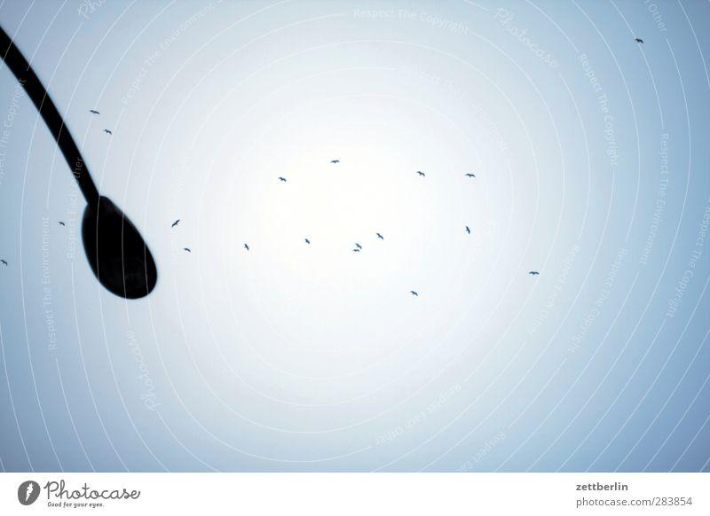 Vögel aus der Froschperspektive Himmel Natur Sonne Umwelt Vogel Wetter fliegen Klima Tiergruppe Sehnsucht Laterne Wolkenloser Himmel Taube Fernweh Klimawandel