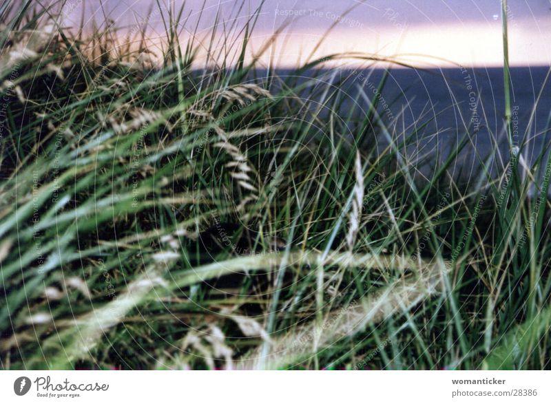 Gras am Meer grün Sommer Ferien & Urlaub & Reisen Stranddüne Ostsee