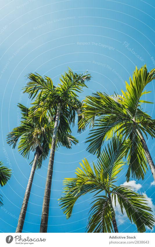 Palmen an sonnigen Tagen Handfläche Sonnenstrahlen Strand Sommer Meer Natur tropisch Ferien & Urlaub & Reisen blau Himmel Landschaft schön Tourismus Sand Baum