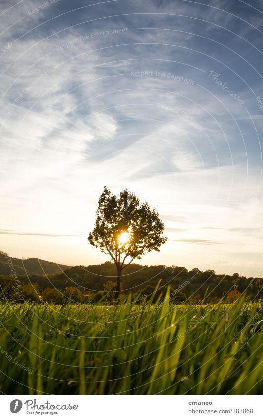 Baum gegen Licht Ferien & Urlaub & Reisen Sommerurlaub Berge u. Gebirge Umwelt Natur Landschaft Pflanze Himmel Wolken Sonne Klima Wetter Gras Grünpflanze Wiese