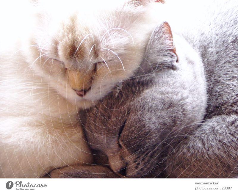 Zwei Mädchen Katze Freundschaft