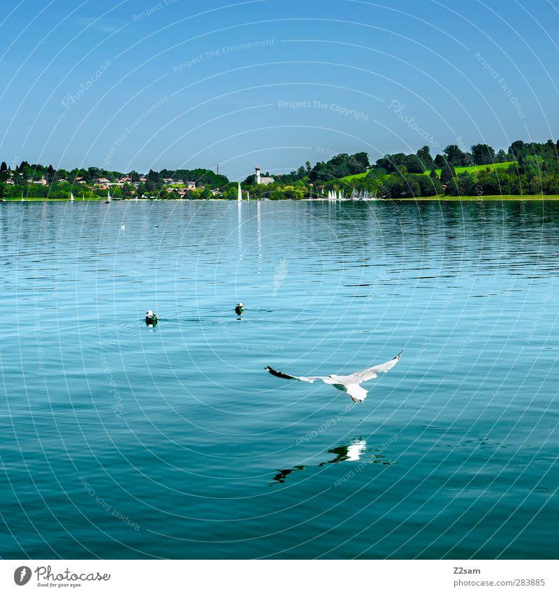 tiefflieger Natur Wasser Sommer Blume Landschaft Umwelt Wiese kalt Bewegung See Horizont Vogel natürlich Fliege Schönes Wetter Idylle