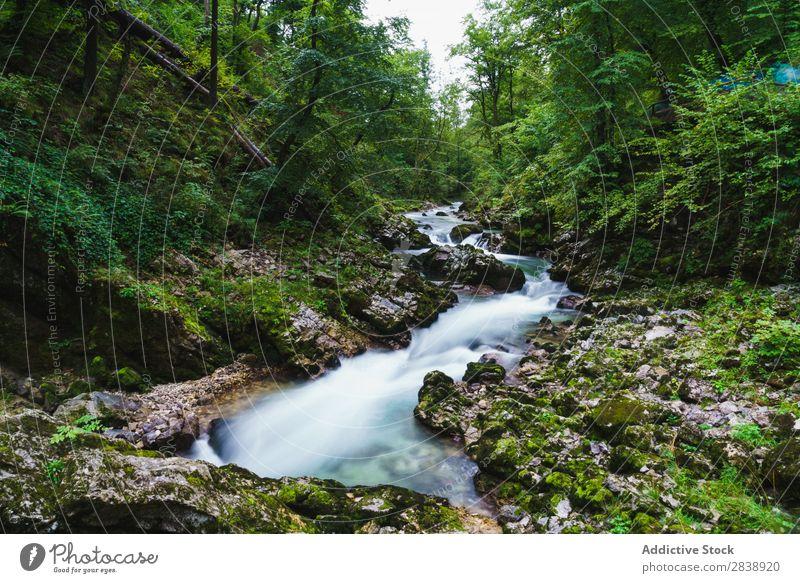 Fluss fließt durch grünen Wald Berge u. Gebirge Sommer Wasser Landschaft Natur schön Farbe mehrfarbig Baum Jahreszeiten Felsen Beautyfotografie strömen fließen
