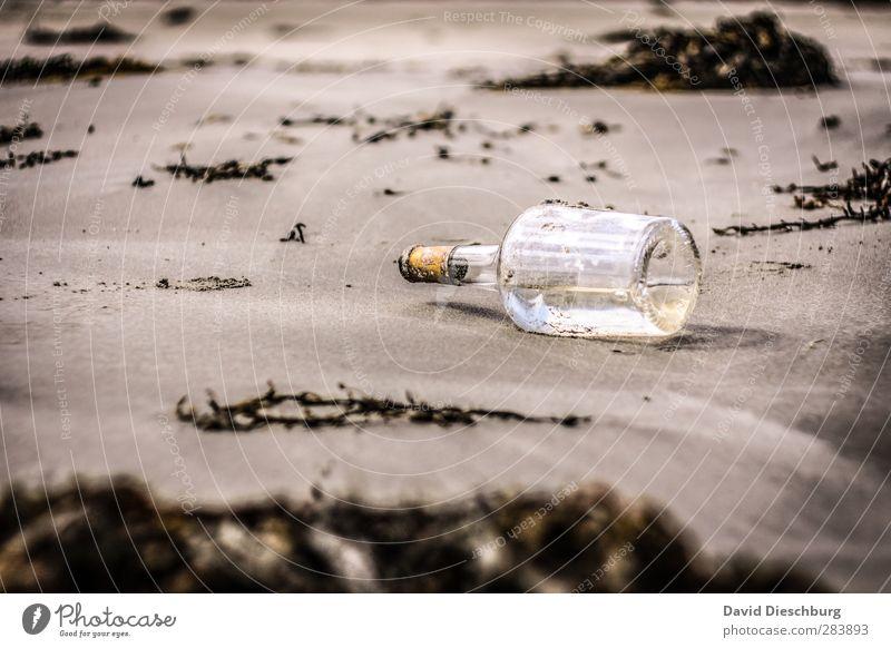 Sie haben Post... Natur Ferien & Urlaub & Reisen Pflanze Sommer weiß Meer Strand schwarz gelb Herbst Frühling Küste braun Sand liegen offen