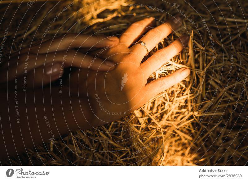 Hände im Heuhaufen schneiden gelb Feldfrüchte ländlich Bauernhof Stapel Landen Weizen Strukturen & Formen natürlich Gold Wiese Ackerbau Beautyfotografie