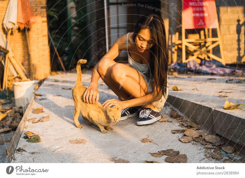 Asiatin spielt mit Katze niedlich Straße Haustier Tier Katzenbaby Pelzmantel schön Irrläufer pelzig wild reizvoll flockig Kopf hübsch aussruhen Säugetier sitzen