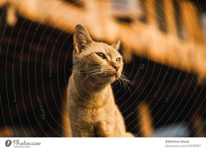 Niedliche blasse Katze auf der Straße niedlich obdachlos bleich Haustier Tier Katzenbaby Pelzmantel schön Irrläufer pelzig Natur Porträt dreckig wild Einsamkeit