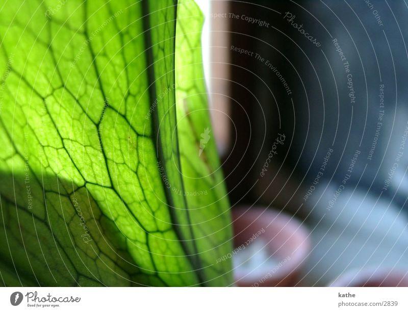 fensterbrett06 grün Pflanze Fensterbrett