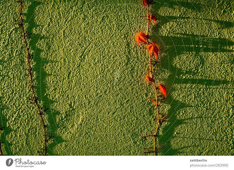 Wein Ferien & Urlaub & Reisen Garten Umwelt Natur Pflanze Blatt Dorf Haus Mauer Wand gut schön bio Biomasse Schrebergarten Kompost wallroth Herbstlaub