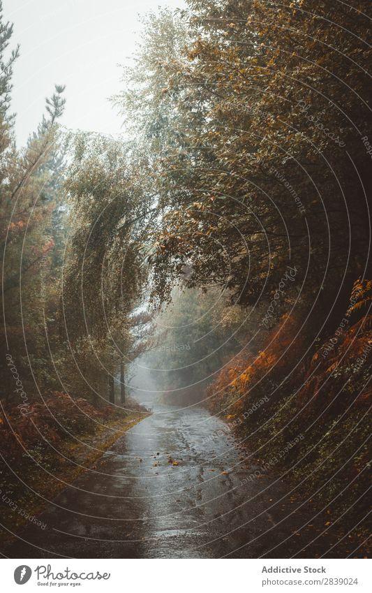 Straße im Herbstwald Wald Natur Regen nass Asphalt Jahreszeiten