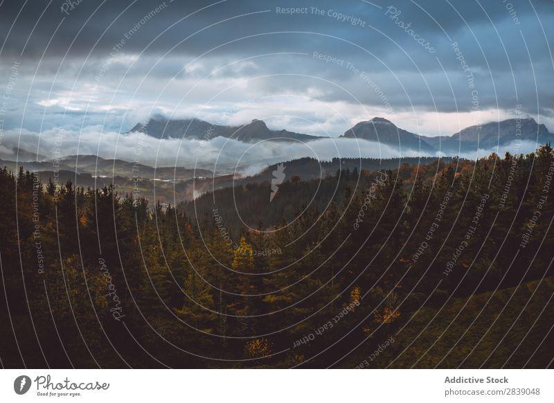 Wald- und Berglandschaft Natur Herbst Aussicht Hügel Berge u. Gebirge ländlich Landschaft Rüssel Jahreszeiten Park schön mehrfarbig natürlich Blatt Umwelt