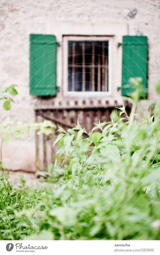 Fenster zum Hof Natur Pflanze Sträucher Blatt Grünpflanze Garten Park Wiese Haus Einfamilienhaus Mauer Wand alt Fensterladen Fensterrahmen Fensterblick Gitter