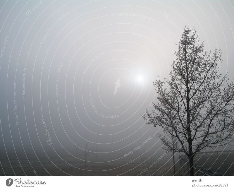 Reif im Dezember kalt Nebel Schneelandschaft Raureif Nachmittag Nebelbank