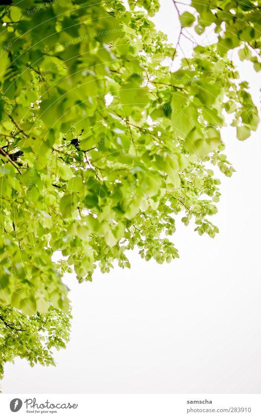 Blätterwald Natur grün Pflanze Baum Blatt Erholung Wald Garten Luft Park natürlich Wachstum Ast Zweig Baumkrone Umweltschutz