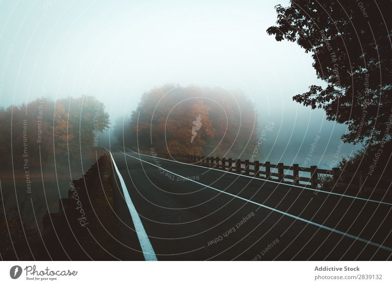 Fahrbahn bei Schlechtwetter Landschaft Straße Wald Mysterium Herbst geheimnisvoll Natur Nebel Zauberei u. Magie Wetter frisch schön Wege & Pfade Dunkelheit
