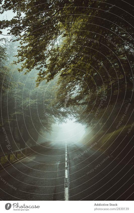 Neblige Straße im Wald Nebel Landschaft geheimnisvoll Natur Mysterium Zauberei u. Magie Wetter frisch schön Wege & Pfade Dunkelheit Außenaufnahme Wildnis