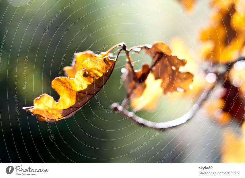 Herbstwärme Blatt Baum Ast mehrfarbig Jahreszeiten Tod welk Neuanfang orange gelb braun Sonne Licht Außenaufnahme Natur
