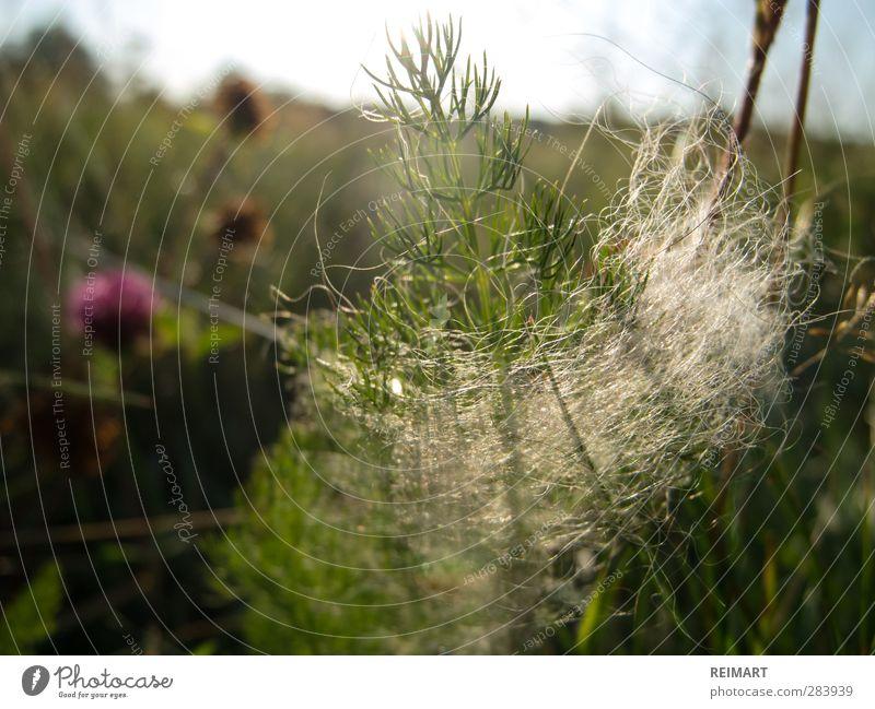 sechzehn Landschaft Gras Sträucher Denken warten natürlich grün Stimmung Frühlingsgefühle Optimismus Fernweh Farbfoto Nahaufnahme Detailaufnahme Menschenleer