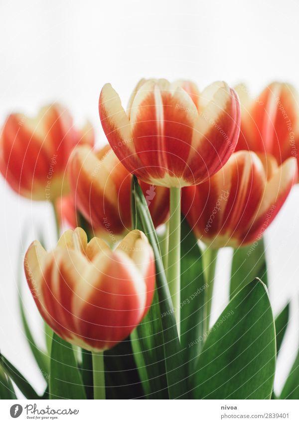 Tulpen Lifestyle kaufen Reichtum Stil Feste & Feiern Valentinstag Natur Pflanze Frühling Blume Wiese Duft Erholung glänzend leuchten schön einzigartig gelb grün
