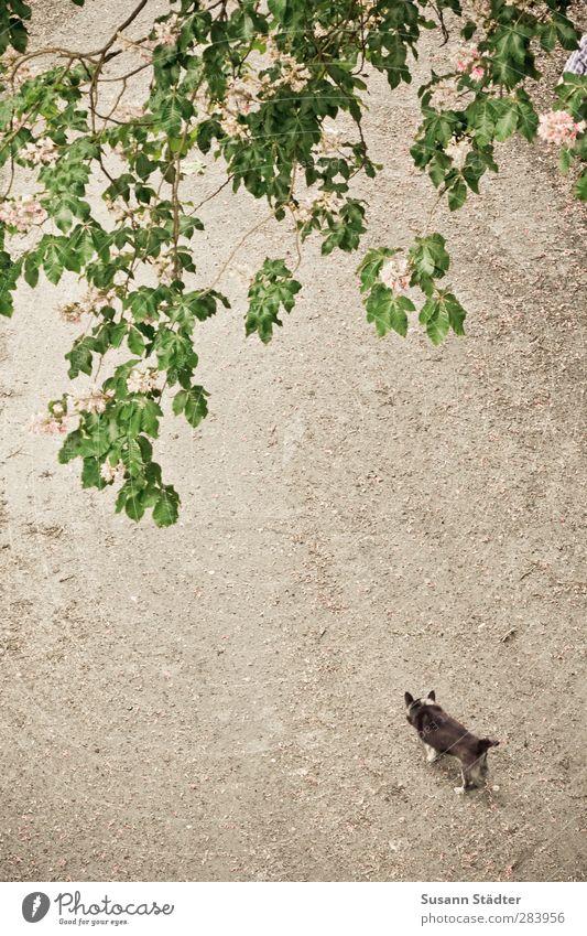 AST5 | du fehlst. Körper Park Hund 1 Tier laufen Einsamkeit Wege & Pfade Fliederbusch Axel klein Mischling Freiheit Farbfoto Außenaufnahme Starke Tiefenschärfe