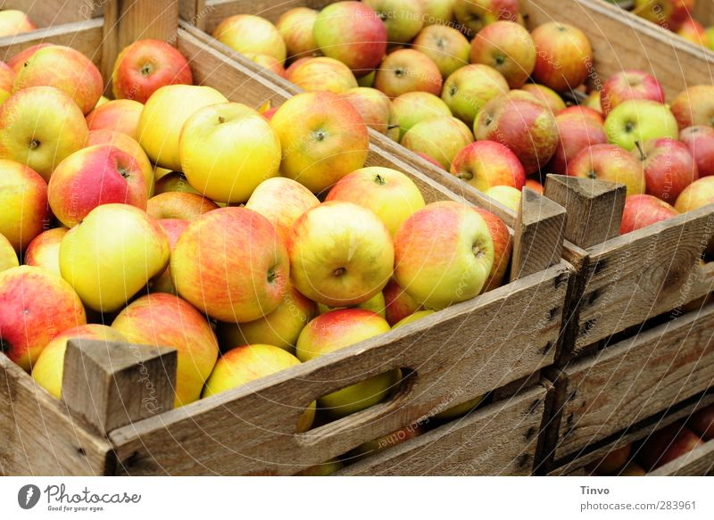 Äpfel in Holzkisten rot schwarz Herbst Gesundheit natürlich Frucht Lebensmittel Gesunde Ernährung frisch süß viele rund Apfel Bioprodukte saftig Geschmackssinn