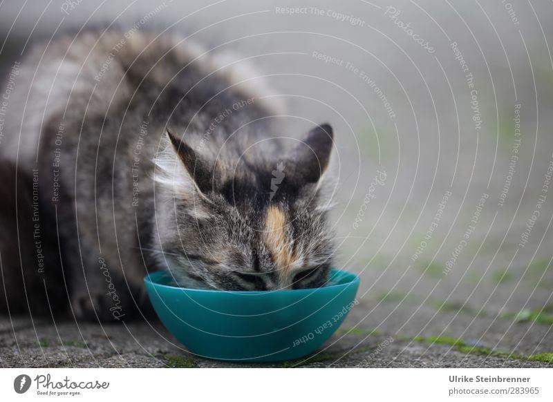 Fünftes Katze Tier Tierjunges Glück lustig Essen natürlich Wachstum niedlich weich Sauberkeit trinken Ohr Fell genießen Tiergesicht