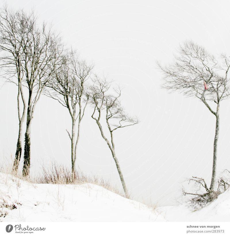 linksbündig Umwelt Natur Landschaft Urelemente Winter Klima Wetter schlechtes Wetter Eis Frost Schnee Wald Seeufer Strand Ostsee Meer verblüht hell schwarz weiß