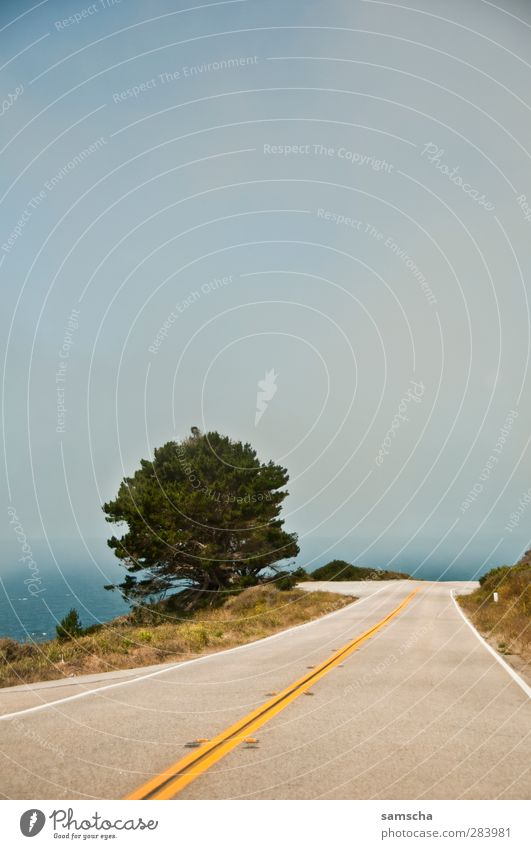 cruisen Himmel Natur Ferien & Urlaub & Reisen Wasser Baum Meer Landschaft Straße Küste Freiheit fahren Aussicht USA Verkehrswege Straßenbelag Amerika