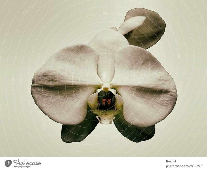Orchidee auf beige Farbe schön Natur Pflanze Frühling Blume exotisch Garten trendy Einsamkeit Exquisit Farbkarte reizvoll fantastisch Beautyfotografie