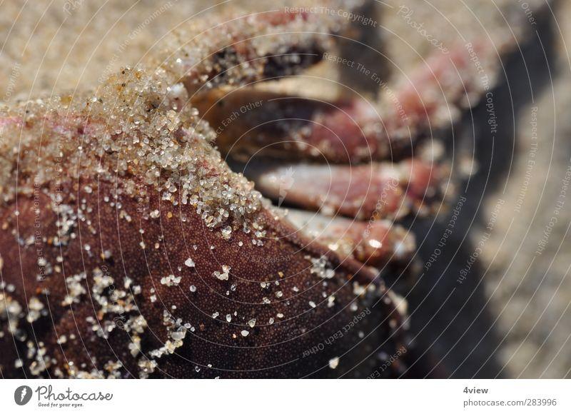 krebsrot Ferien & Urlaub & Reisen Sommer Strand Küste Sand Ausflug Schönes Wetter Nordsee Angeln Fährte Krebstier Totes Tier
