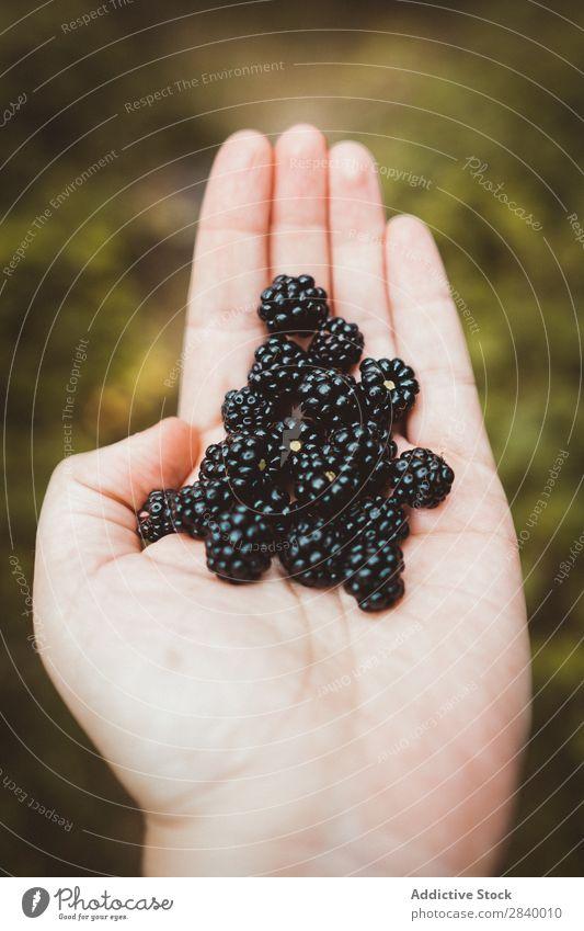 Erntehand mit Brombeerhaufen Mensch Handvoll Brombeeren lecker Natur süß organisch frisch Sommer Gesundheit natürlich saftig Landwirtschaft Dessert Ernährung