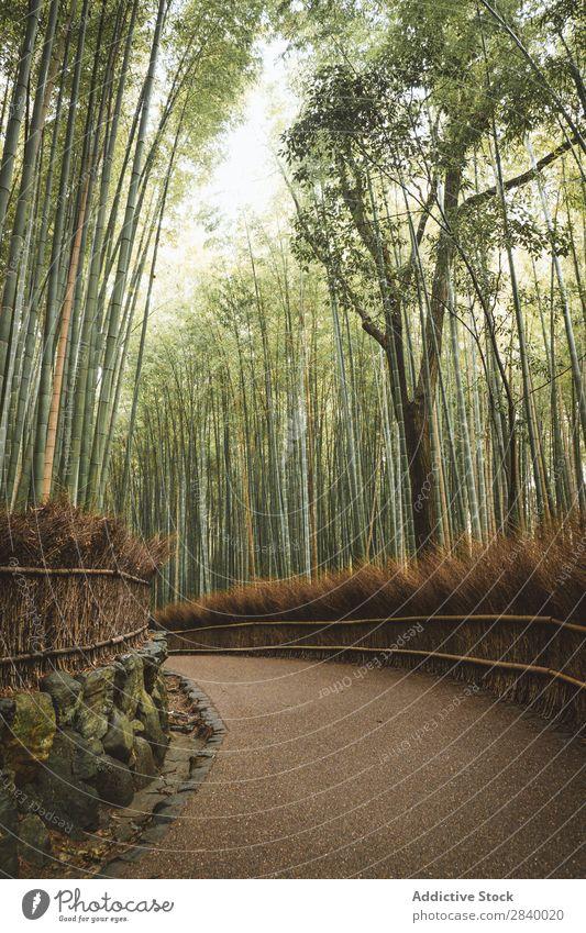 Pfad im schönen Bambuswald Park Weg Landschaft Garten grün Natur Gang Aussicht Pflanze Straße Gelassenheit Wald Umwelt Tourismus Ferien & Urlaub & Reisen Kultur