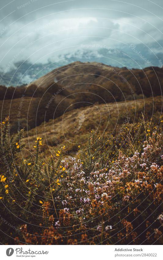 Wildblumen in stimmungsvollen Herbstbergen Berge u. Gebirge trist Wiesenblume Tal Landschaft Wetter Überstrahlung dunkel Idylle abgelegen malerisch Menschenleer