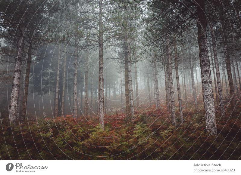 Helle Herbstbäume am felsigen Hang Landschaft Baum Wald herbstlich Farbe Natur prunkvoll friedlich Felsen Berge u. Gebirge Blatt ruhig Umwelt Jahreszeiten