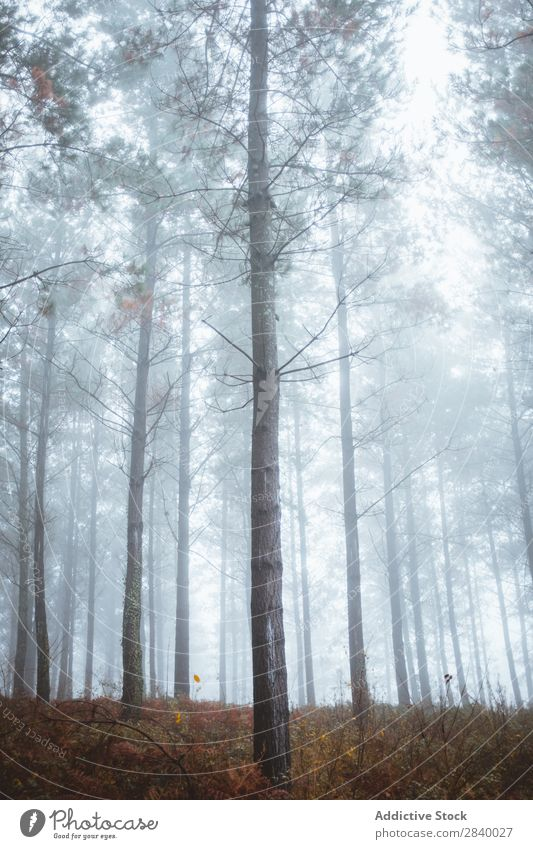 Landschaft mit ruhigen Herbstwäldern Wald Sonnenlicht Zauberei u. Magie Natur Nebel malerisch frisch Blatt Umwelt Licht Jahreszeiten natürlich hell