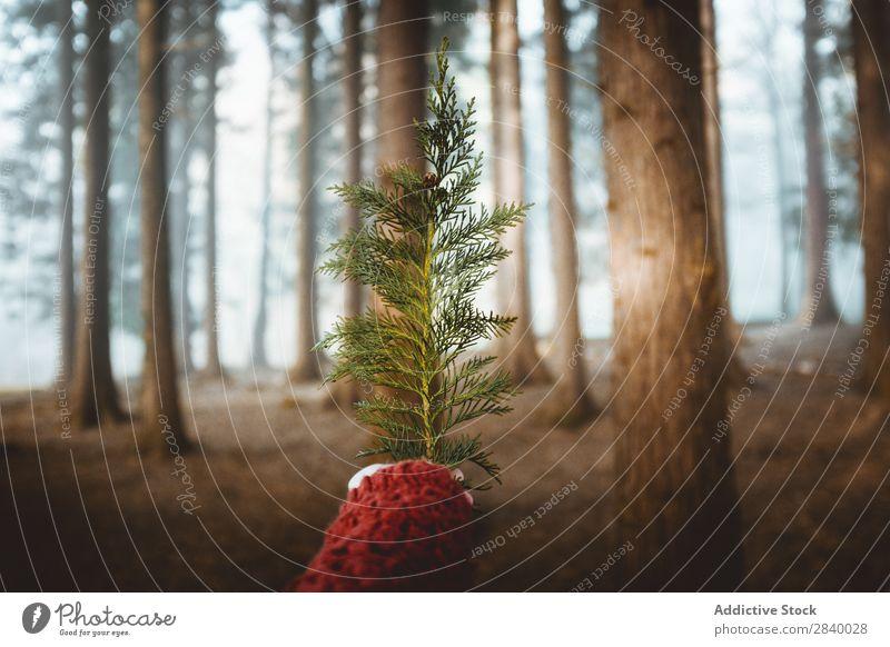 Getreideperson mit immergrünem Ast im Wald Mensch nadelhaltig Natur Fichte Hand Jahreszeiten Umwelt zeigen Baum rustikal Immergrün Beautyfotografie Kiefer Tanne