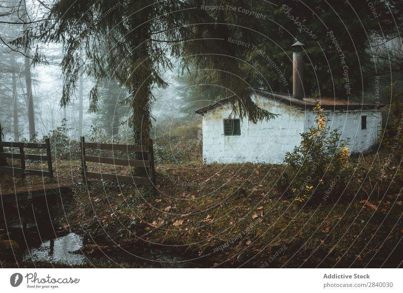 Kleines verlassenes Haus in gruseligen Wäldern Wald geheimnisvoll Verlassen Hütte Nebel Landschaft Gebäude Architektur ruhig spukhaft Grunge Natur Jahreszeiten