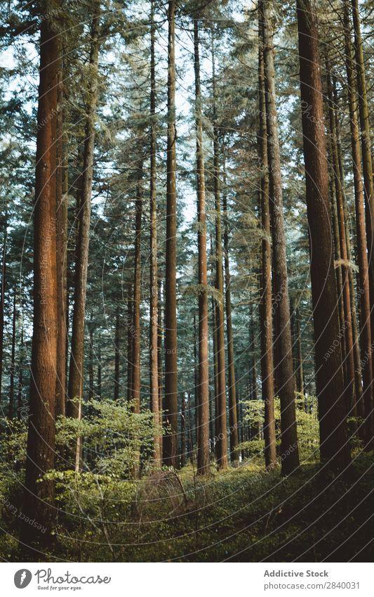 Landschaft mit ruhigen Herbstwäldern Wald Sonne Zauberei u. Magie Natur Nebel malerisch frisch Blatt Umwelt Licht Jahreszeiten natürlich hell Sonnenstrahlen