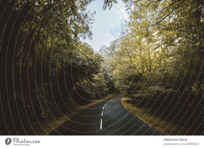 Landschaft der Straße, die im Wald wegläuft. geheimnisvoll abgelegen ländlich Umwelt Wege & Pfade