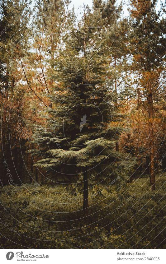 Üppige Herbstbäume im Wald mehrfarbig üppig (Wuchs) Wildnis grün Jahreszeiten Natur Umwelt Idylle schön Farbe malerisch organisch Beautyfotografie Pflanze Blatt